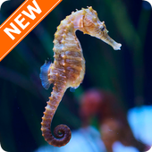 Seahorse Wallpapers HD icon