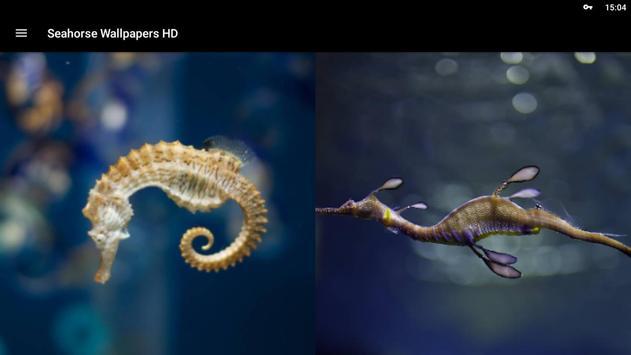 Seahorse Wallpapers HD screenshot 10