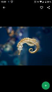 Seahorse Wallpapers HD screenshot 1