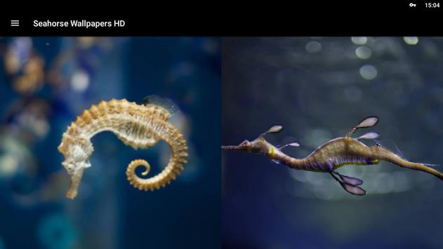 Seahorse Wallpapers HD screenshot 5