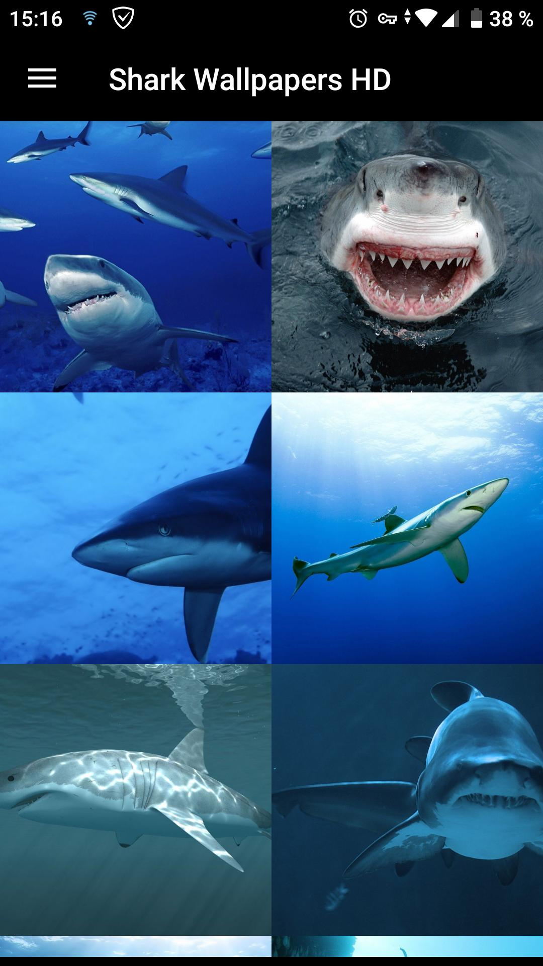 Shark Wallpapers Hd For Android Apk Download
