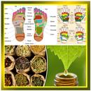 Pijat Refleksi dan Obat Herbal Tradisional APK Android