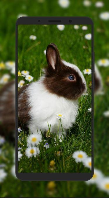 Rabbit Wallpaper For Android Apk Download