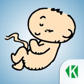 Беременность по неделям KLO icon