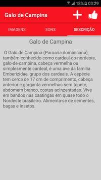Cantos de Galo de Campina screenshot 2