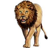 Apps King icon