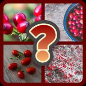 Fruit Quiz icon