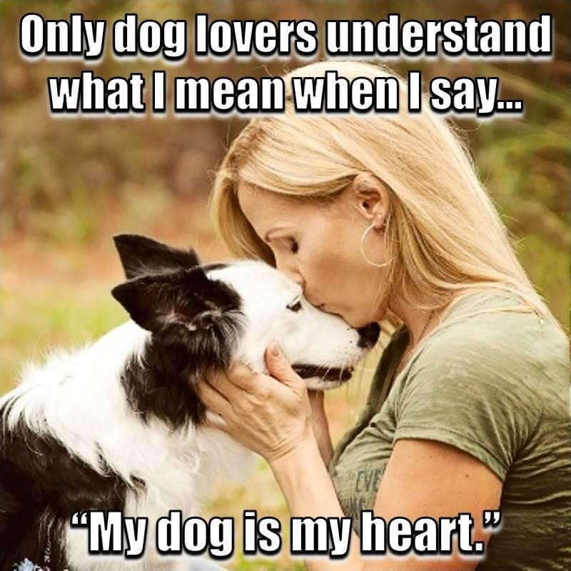 Animal Lover Quotes - Dog Lover Status - Cat Love for
