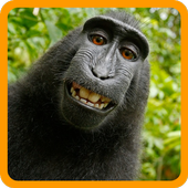 Guess The Animal: Animal Quiz icon