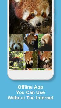 Red Panda Wallpaper screenshot 2