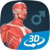 Human body (male) educational VR 3D आइकन