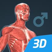 Le corps humain (masculin), 3D éducative, VR icône