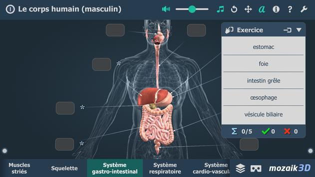 Le corps humain (masculin), 3D éducative, VR capture d'écran 4