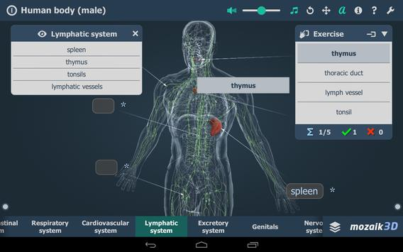 Human body (male) screenshot 19