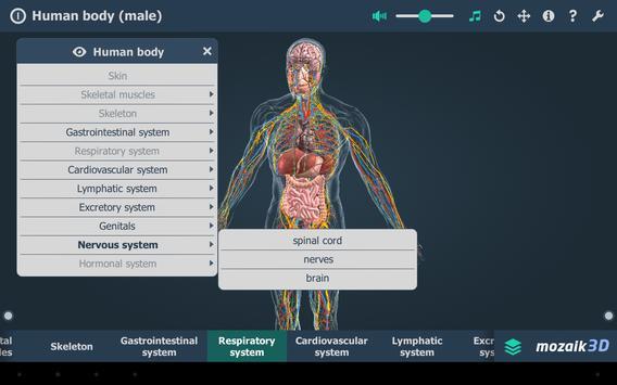 Human body (male) screenshot 10