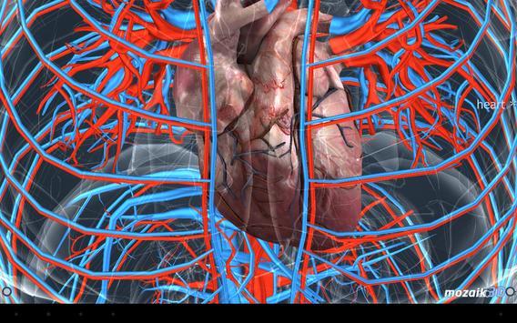 Human body (male) screenshot 11