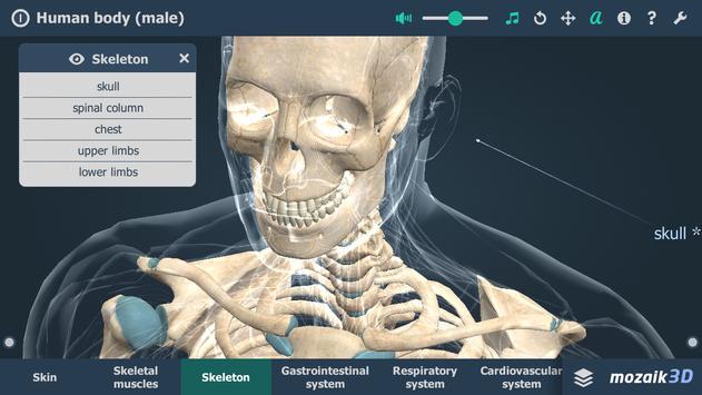 Human body (male) screenshot 1