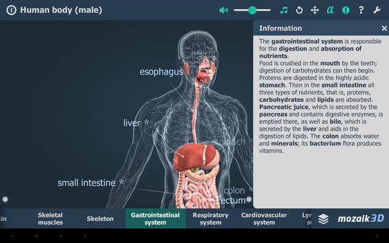 Human body (male) screenshot 9