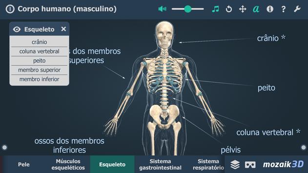 Corpo humano (masculino) 3D educacional RV imagem de tela 2