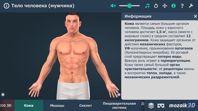 Тело человека (мужчина), интерактивное 3D ВР скриншот 1