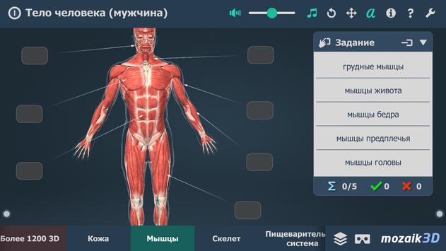 Тело человека (мужчина), интерактивное 3D ВР скриншот 4