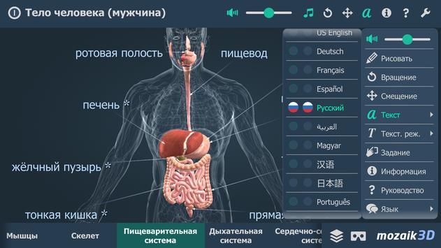 Тело человека (мужчина), интерактивное 3D ВР скриншот 5