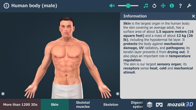 Human body (male) penulis hantaran
