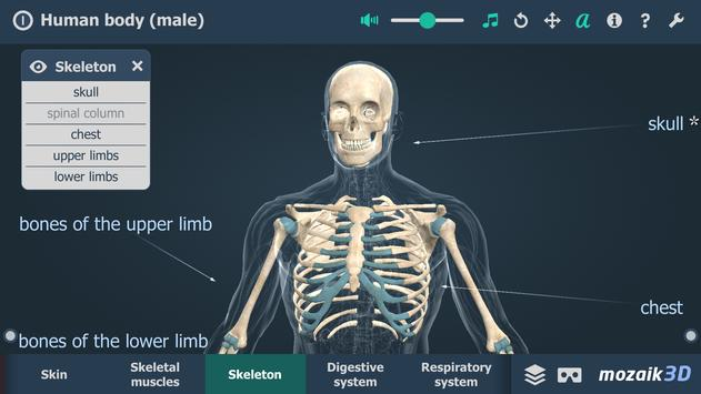 Human body (male) syot layar 2