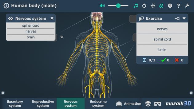 Human body (male) syot layar 4