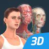 인체 (여성)대화식 교육적 3D 아이콘