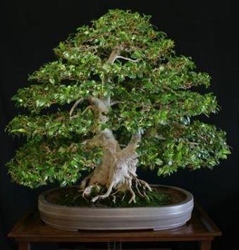 Bonsai Plant Collection screenshot 1