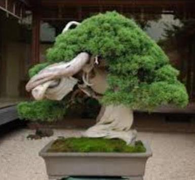 Bonsai Plant Collection screenshot 3