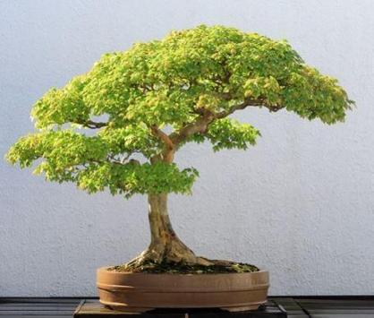 Bonsai Plant Collection screenshot 4