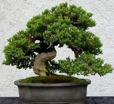 Bonsai Plant Collection screenshot 5