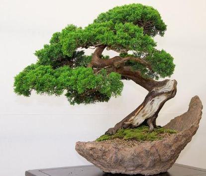 Bonsai Plant Collection screenshot 6