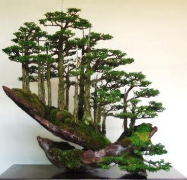 Bonsai Plant Collection screenshot 7