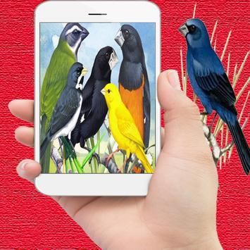 Paraíso Brasileiro Dos Pássaro-poster