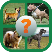 Animals Dogs coloring ( All Dogs names  pictures ) icon