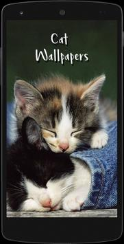 Cute Cat HD Wallpapers 截图 6