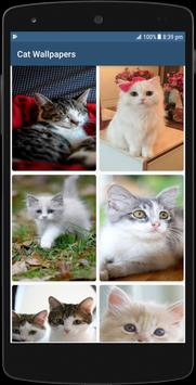 Cute Cat HD Wallpapers 截图 17