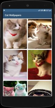 Cute Cat HD Wallpapers 截图 1