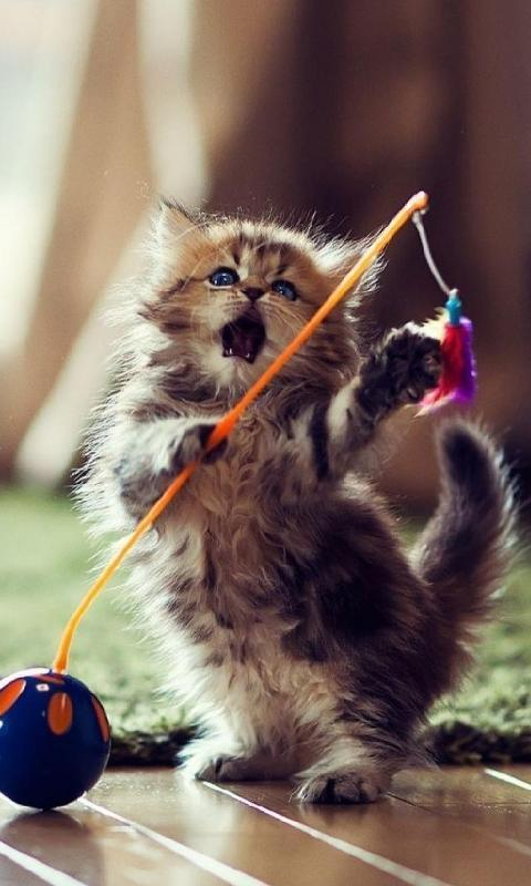 Funny Cats New Hd Wallpapers For Android Apk Download
