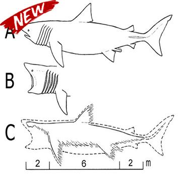 Steps To Draw The Best Fish poster