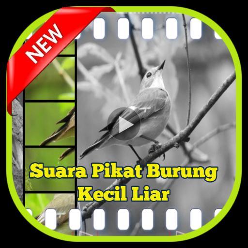 98  Gambar Burung Kecil HD Paling Keren Gratis