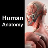 Human Anatomy Quiz 图标
