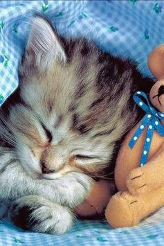 Fluffy Kittens Puzzle screenshot 3