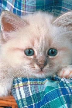 Fluffy Kittens Puzzle screenshot 1