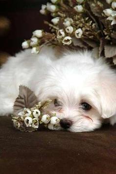 White Baby Dog Puzzle screenshot 1