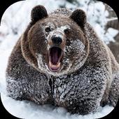 Bear Wallpaper 1 icon