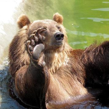 Bear Wallpaper 1 screenshot 5